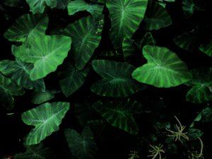 Wirkung von Farben Grüne Blätter